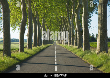 Avenue of trees alongside a road in rural France. Languedoc-Rousillon. France. - Stock Photo