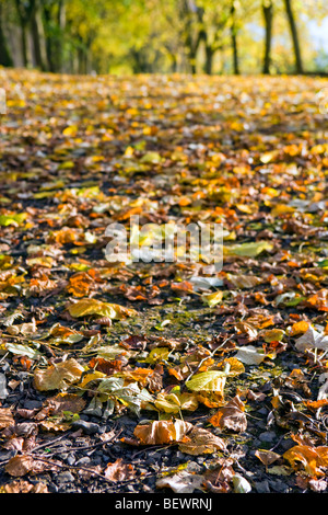 shallow depth of field creative image of an autumn scene with focus on leaves - Stock Photo