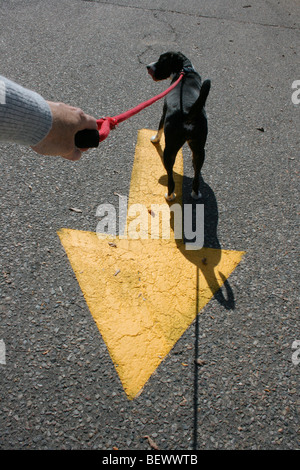 dog going the wrong way - Stock Photo