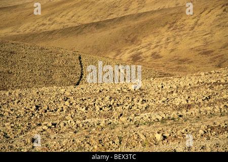 Ploughed clay hillsides, Crete Senesi, Tuscany, Italy - Stock Photo