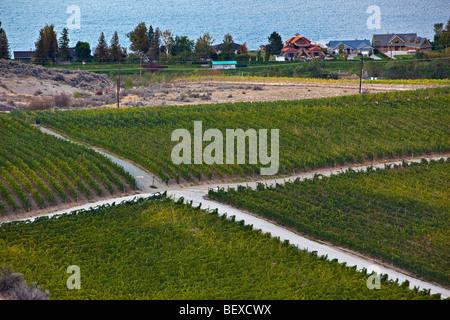 Crossroad amongst vineyards near the city of Osoyoos, Okanagan-Similkameen Region, Okanagan, British Columbia, Canada. - Stock Photo