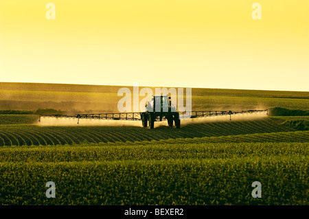 Post-emergent herbicide being applied to an early growth grain corn field by a John Deere sprayer in late afternoon - Stock Photo