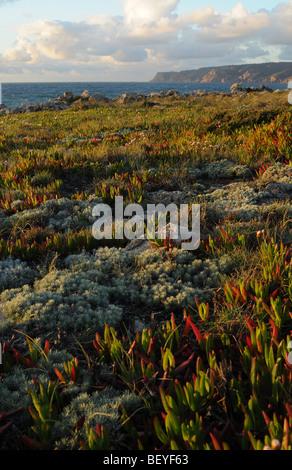 Vegetation next to the sea,  Portugal Coast, Near Aveiro. - Stock Photo