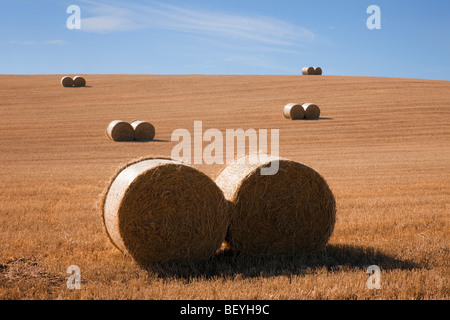 Country scene pairs of round straw bales in a harvested wheat field on a farm during September harvest season in - Stock Photo