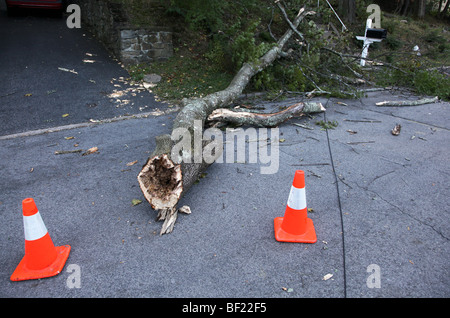 Large tree branch and downed wire resting on street after early autumn storm, Dobbs Ferry, NY, USA - Stock Photo