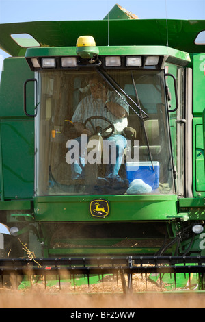 Agriculture - A farmer talks on his cell phone in the cab of a combine while harvesting soybeans / Northland, Minnesota, - Stock Photo