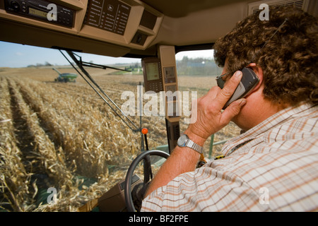 Agriculture - A farmer talks on his cell phone in the cab of a combine while harvesting grain corn / Northland, - Stock Photo