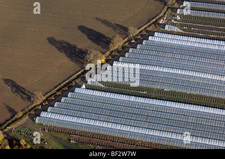 Aerial view of polytunnels on a fruit farm in Perthshire - Stock Photo