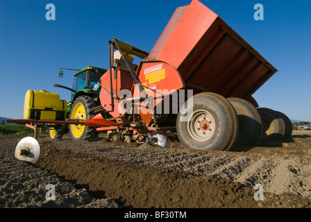 Agriculture - Planting potatoes with a 4 row planter / near Burlington, Washington, USA. - Stock Photo