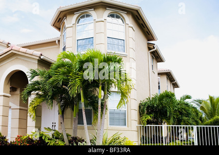 Palm tree in front of a building - Stock Photo