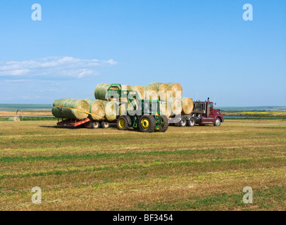 Agriculture - Loading round alfalfa hay bales onto a tractor trailer using a farm tractor / Alberta, Canada. - Stock Photo