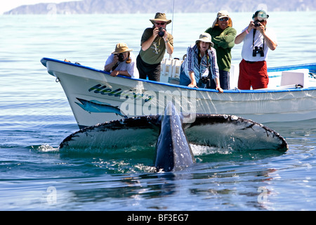 Humpback Whale (Megaptera novaeangliae). Whale-watchers watching diving whale. - Stock Photo