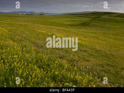 Flowery grassland on the east coast of Berneray (Bearnaraigh) in July; Outer Hebrides, Scotland - Stock Photo