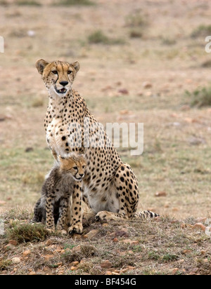 Cheetah with its cub - Stock Photo