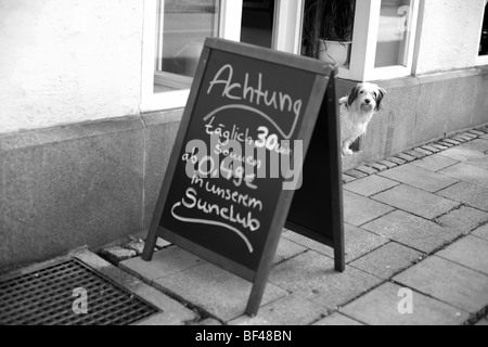 A dog looks from behind a sign saying Achtung outside a shop in Germany - Stock Photo