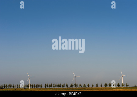 Wind turbines behind a tree-lined avenue, Zeeland, Holland, Netherlands, Europe - Stock Photo