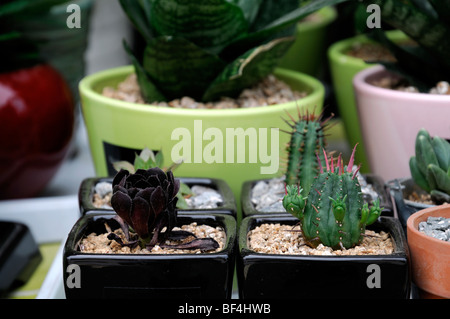 Succulents for sale stock photo royalty free image Cactus pots for sale