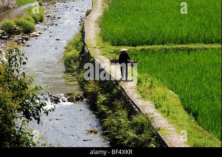 Miao farmer walking beside rice paddy with carrying pole, Zhaoxing Dong Village, Liping County, Guizhou Province, - Stock Photo