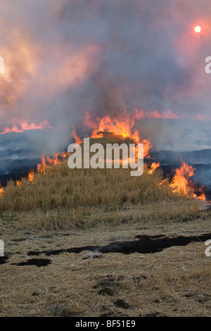 Wheat stubble being burned after the harvest to control diseases, reduce weed competition and to make the next planting - Stock Photo