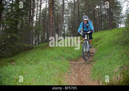 Mountain bike rider on single trail in the forest near San Vigilio, Naturpark Fanes-Sennes-Prags, Trentino, South - Stock Photo