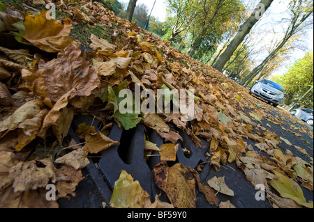 Leaves fallen from Deciduous trees begin to block roads drainage systems with possible flooding a result from the - Stock Photo
