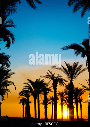The silhouettes of palms on beautiful sunset background - Stock Photo