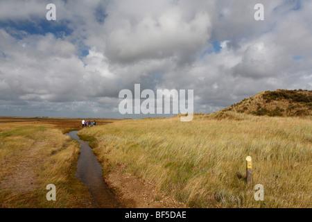Salt marsh in De Slufter Nature Reserve, Texel, Holland, The Netherlands, Europe