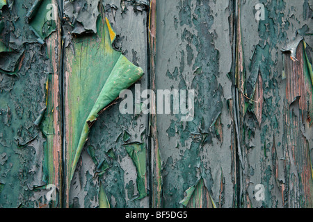 Flaking paint on an old wooden door, Texel, Holland, The Netherlands, Europe - Stock Photo