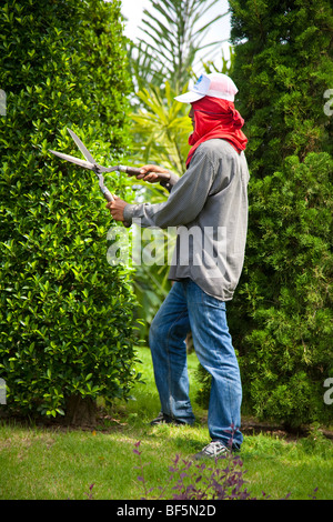 Gardener, workers clipping hedges & trees, shape. Tree Topiary at Suan Nong Nooch or NongNooch Tropical Botanical - Stock Photo