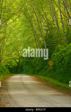 Rural dirt road through green trees and forest along the Coastal Drive, Redwood National Park, California - Stock Photo