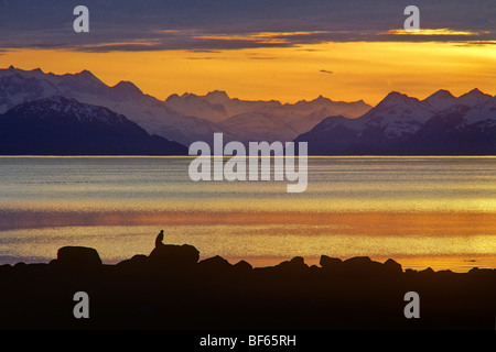 Bald Eagle on shore of Glacier Bay at sunset, Fairweather Mountains is distance, Glacier Bay National Park, Alaska, - Stock Photo