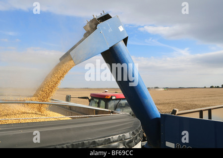 Soybeans are moved from a grain wagon pulled by a Case farm tractor to a waiting grain truck to take them to market. - Stock Photo
