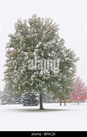 Lonely Tree during fall snow - Stock Photo