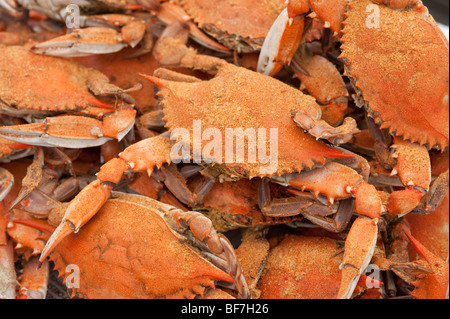 Steamed crabs , Chesapeake Bay Maryland - Stock Photo