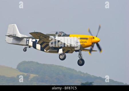 North American P51 Mustang 'Ferocious Frankie' aircraft landing at Goodwood airfield, Sussex Great Britain, England, - Stock Photo