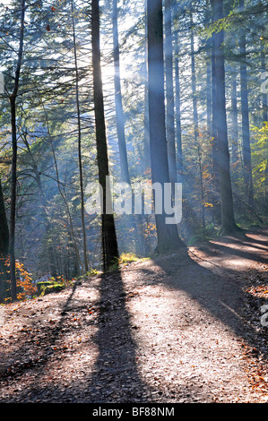 The woodland walk to the Hermitage at Inver Dunkeld, Perthshire, Tayside, Scotland.  SCO 5517 - Stock Photo