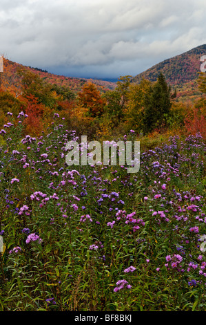 Autumn Color and Asters Blooming in Crawford Notch in the White Mountains National Forest in New Hampshire - Stock Photo
