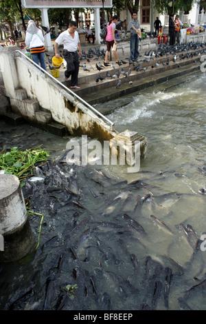 Fishs at Chao Phraya river , Bangkok , Thailand - Stock Photo