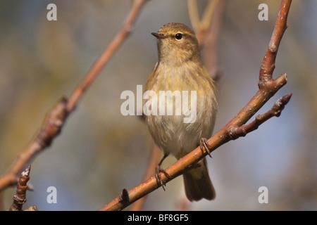 wildlife - Stock Photo