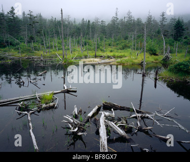 Beaver Bog on a foggy day, near Lonesome Lake, White Mountain National Forest, New Hampshire