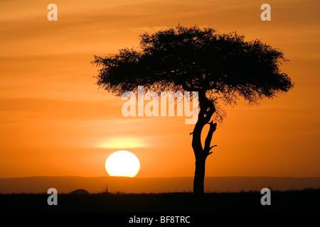 Sunset in the Mara - Masai Mara National Reserve, Kenya - Stock Photo