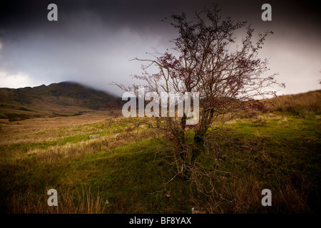 North Wales Snowdonia Croesor Autumn colourful stormy colorful landscape nature - Stock Photo