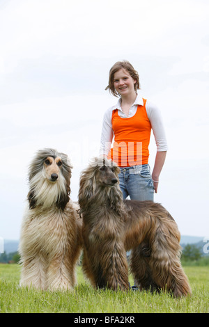 Afghanistan Hound, Afghan Hound (Canis lupus f. familiaris), girl with their two dogs in a meadow, Germany - Stock Photo