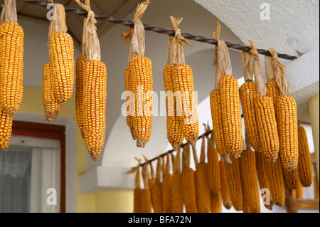Corn drying outside a farm house at Morbish - am - see, Neusiedler See, Austria - Stock Photo