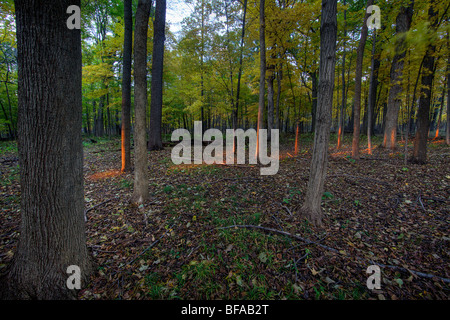 Light, streaming through forest. - Stock Photo