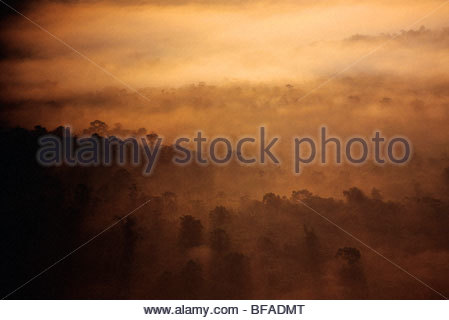 Sunrise over rainforest (aerial), Cockscomb Basin, Belize - Stock Photo
