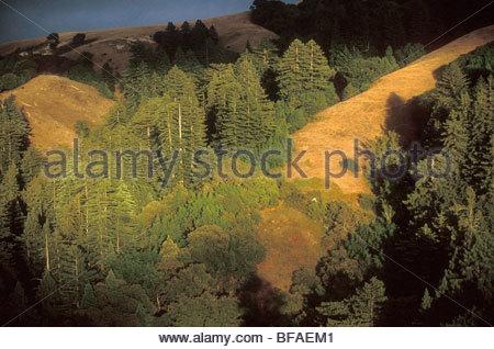 Redwoods on coastal ridges (aerial), Sequoia sempervirens, Big Sur, California - Stock Photo
