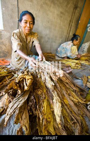 Tobacco Drying Kiln in Nusa Tenggara on Lombok Island in Indonesia - Stock Photo