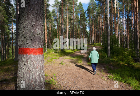 Elderly woman hiking in the pine ( pinus sylvestris ) forest growing on a glacial esker , Finland - Stock Photo