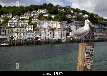 Seagull standing on 'Do Not Feed Seagulls' Sign Looe Cornwall England - Stock Photo